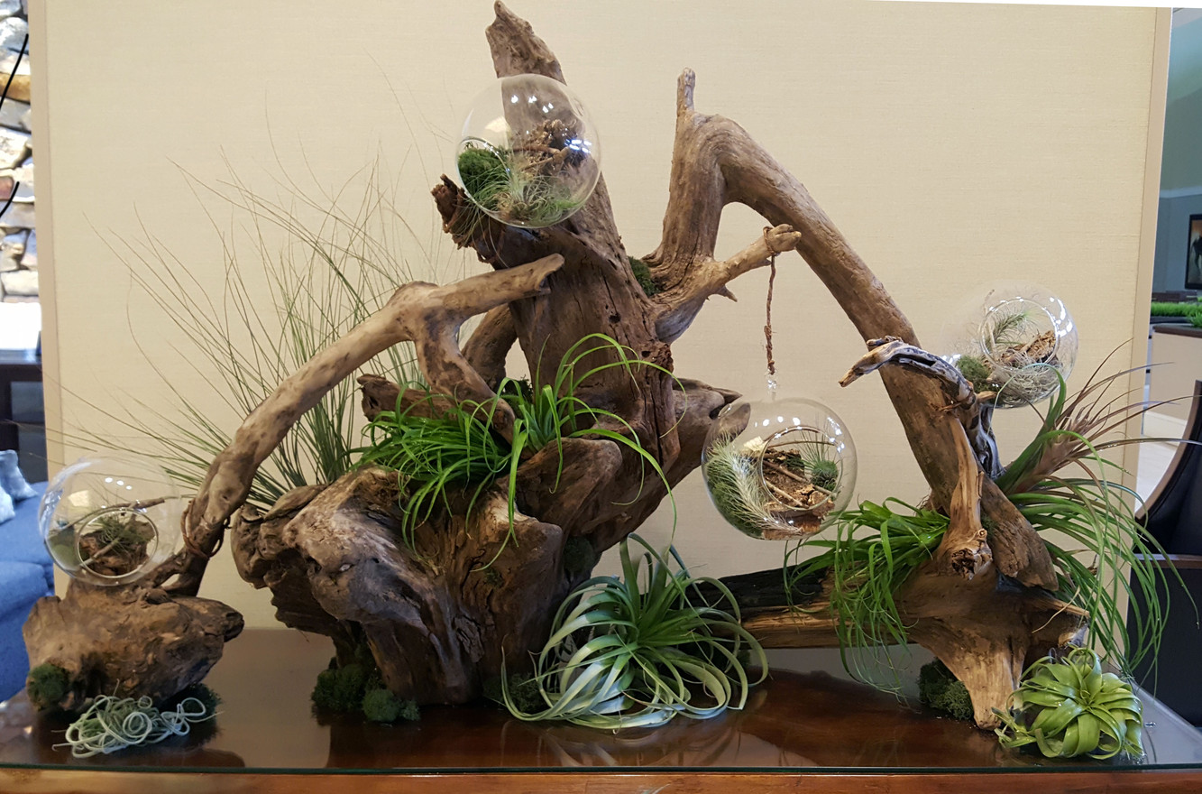 Botanical Display with Airplants