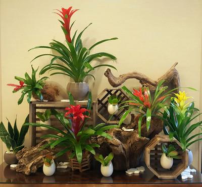 Botanical Display with Bromeliads