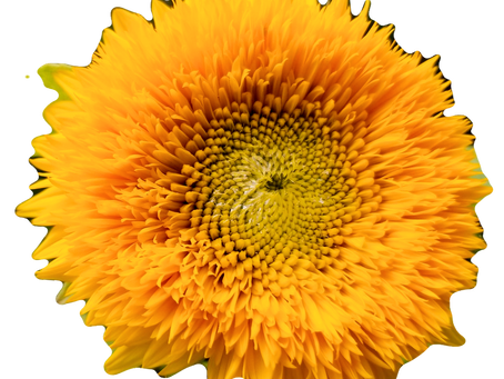 Lessons from Sunflower and free downloadable Journal page PDF!