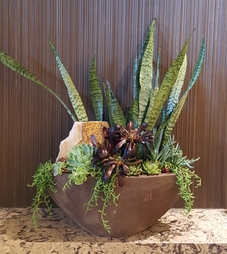 Botanical Succulent