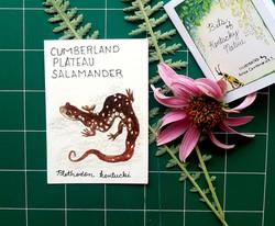 CPSalamander