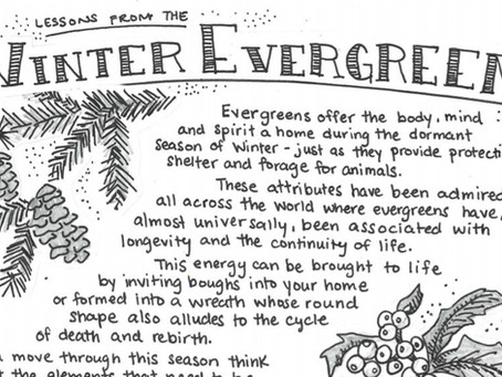 Plant Musings: Winter Evergreen - Free Downloadable