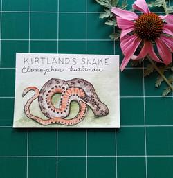 KirtlandsSnake