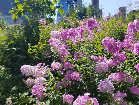 Gardens of Chicago