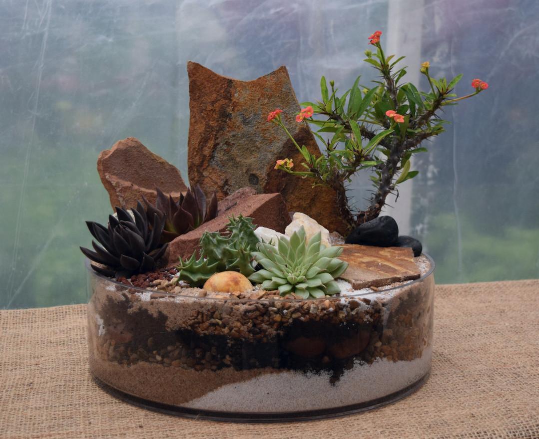 Euphorbia Display