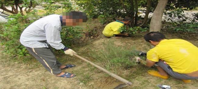 綠手指園藝工作隊