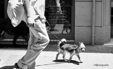 Project Normalness by documentary photographer Cilla Rijnbeek: a man and his tiny and wrinkled Yorkshire Terrier showing some teeth in Barcelona.