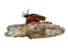 Wezentje op aangespoeld hout.