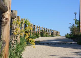 Projet de sentier naturaliste à l'Arbois