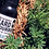Thumbnail: BEARD BOURBON® | CEDAR BAY 1 OZ BOTTLE