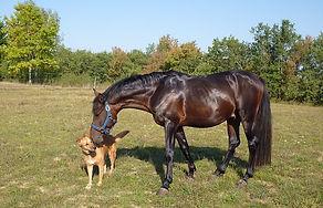 horse-1704969_640.jpg
