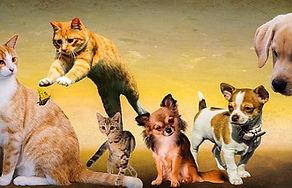 animals-2222007_640.jpg