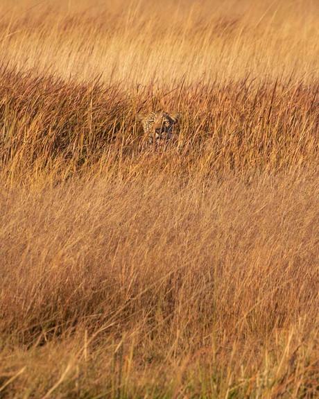 Watcher in the Grass
