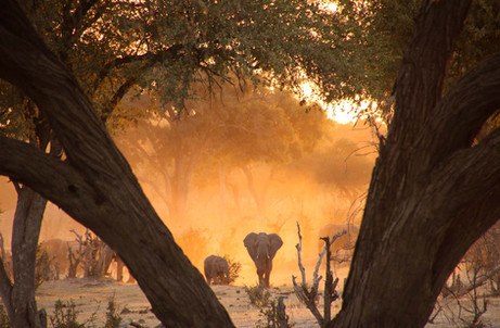 Dusty Elephant