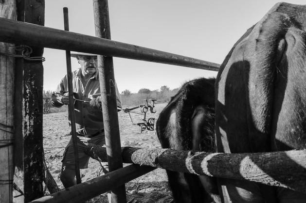 Botswana Cattle Post
