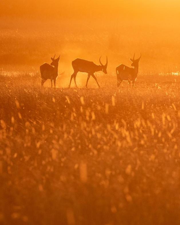 Okavango Dreams