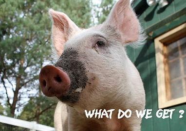 Holly's hope, Ontario Walk for Farm Animals