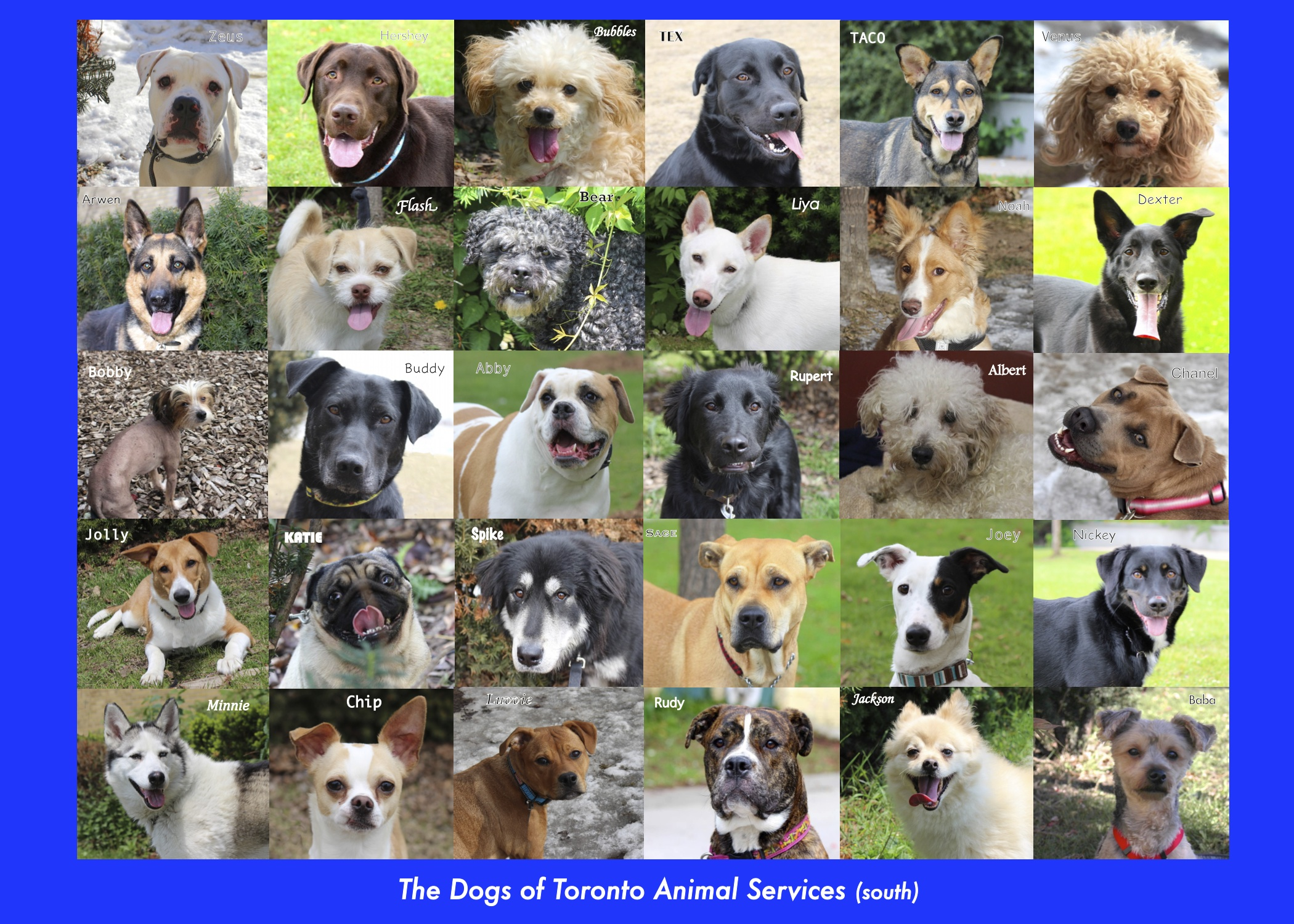 The Dogs of Toronto Animal Services