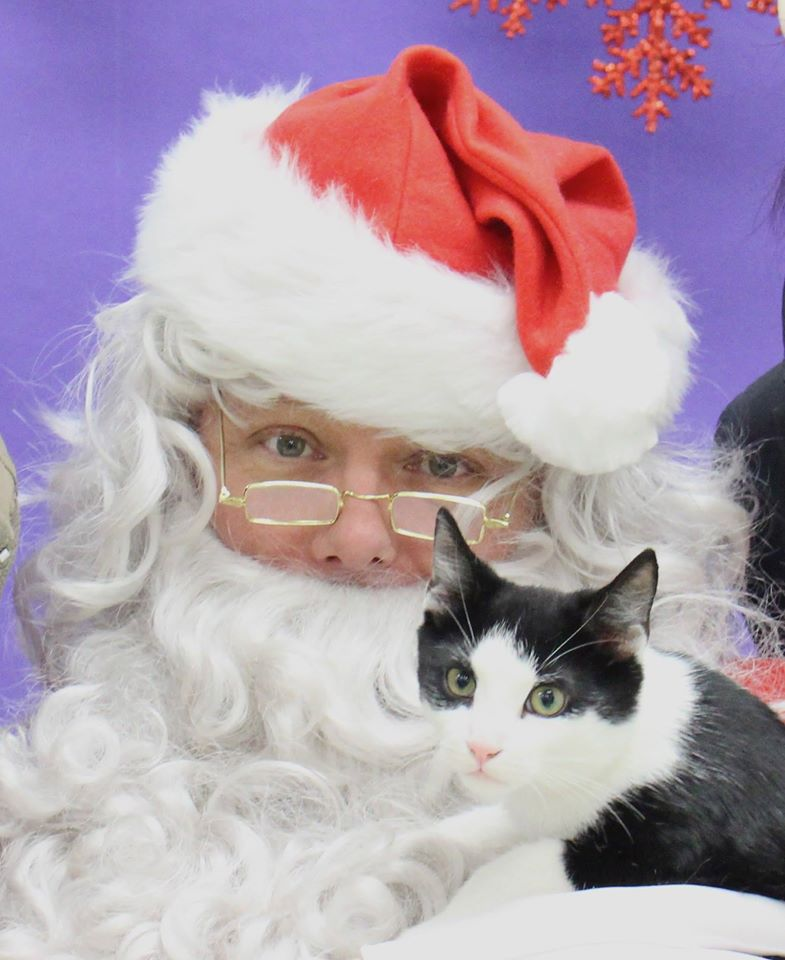 even us kitties love santa