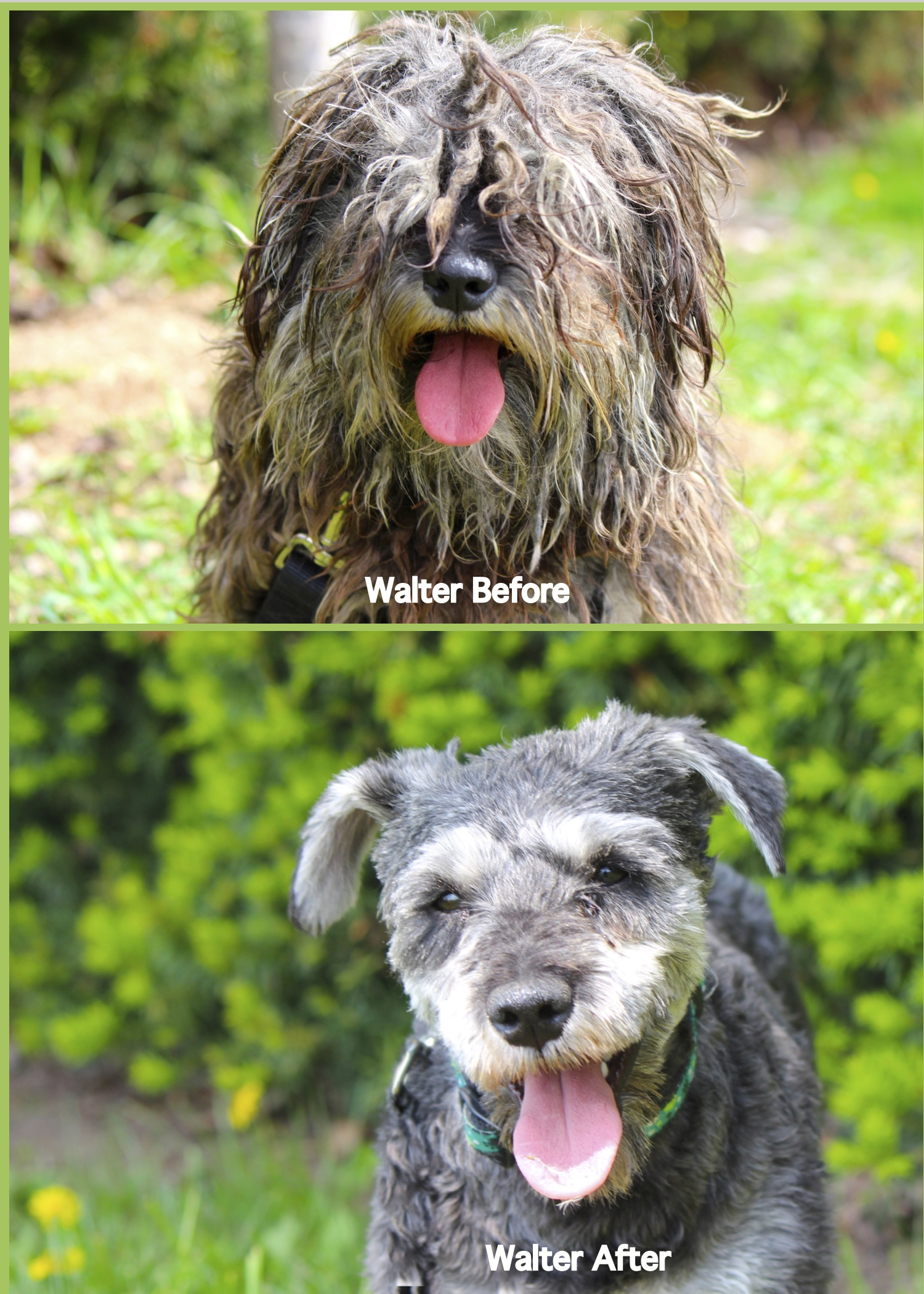Walter: Before & After