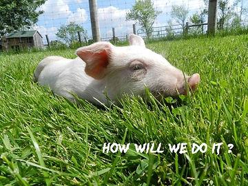 Holly's hope, Walk for Ontario Farm Animals
