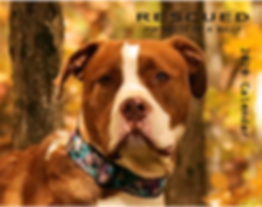 Bully Breed Calendar 2020