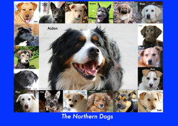 THE NORTHERN DOGS