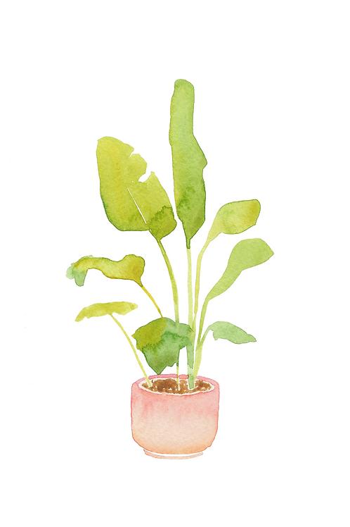 Palm Watercolor