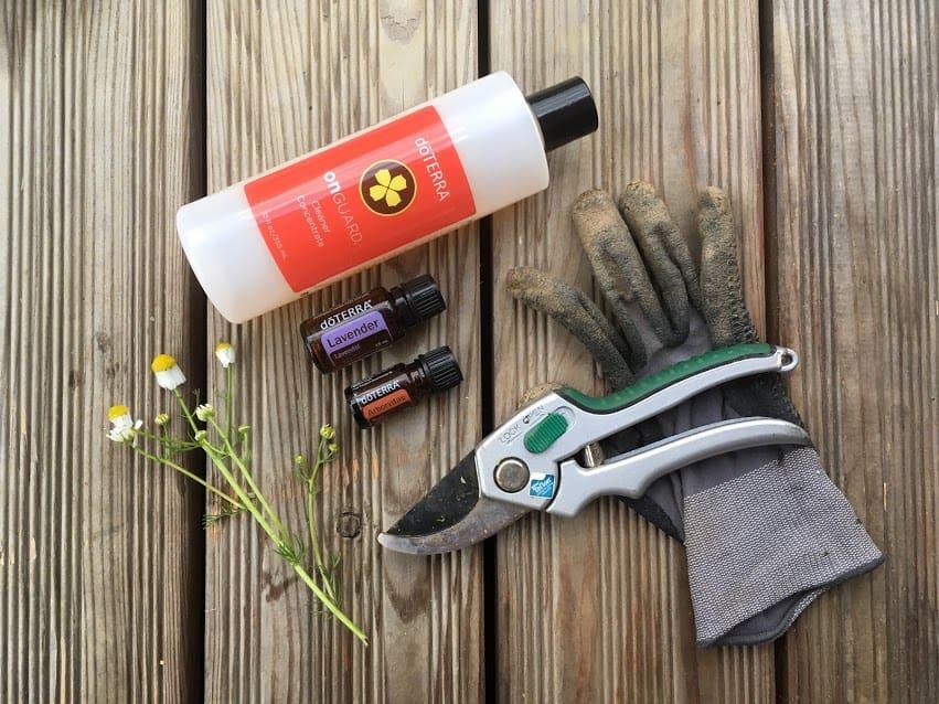 Lavendel-Spray-gegen-Blattläuse