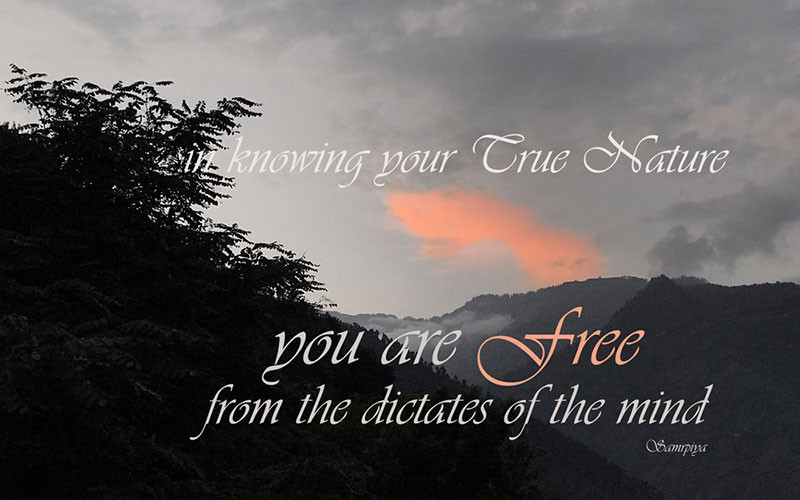 Online Meditation Teacher Training/Meditation Quote: In knowing your True Nature you are Free
