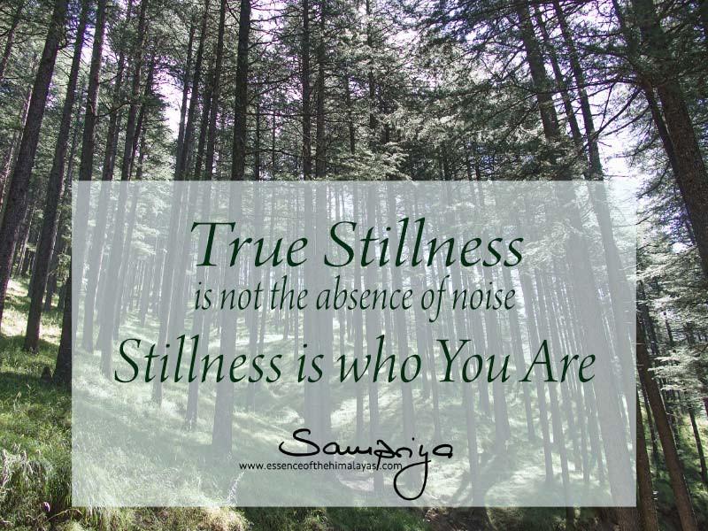 Sampriya's Meditation Quotes   True Stillness is not the absence of noise