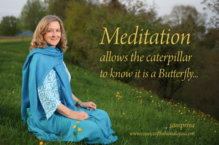 Online Meditation Training / Meditation Quote: Meditation allows the caterpillar to know it is a Butterfly