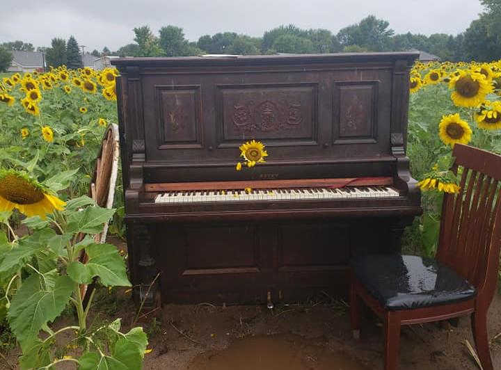 Music in the Fields
