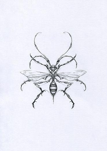 insect PBK9, dessin sur format A5, mine de plomb, dessins originaux exposition Crash PBK9