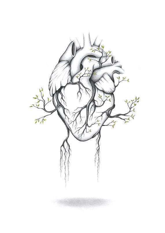 Coeur, illustration A3 au crayon et ecoline.