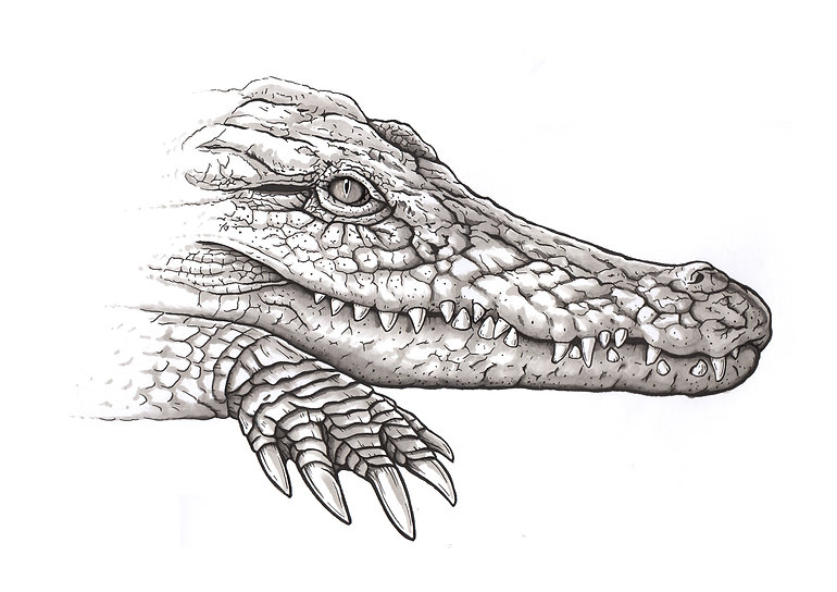 alligator, dessin tatouage, crocodile