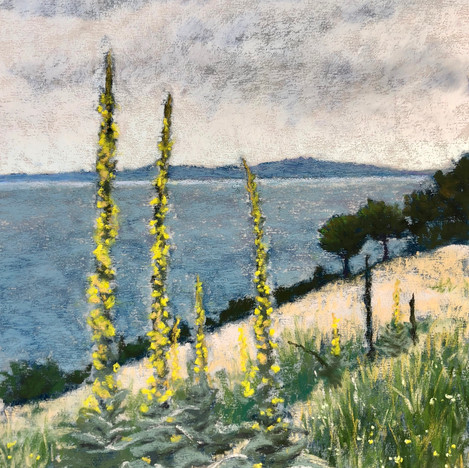 Mullein by the Sea