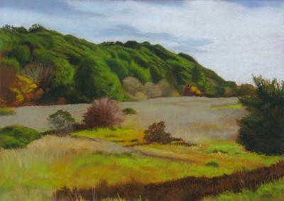 Wilder Meadow