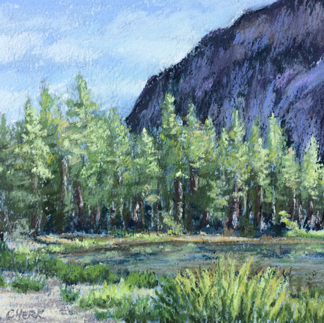 Evergreens- Yosemite