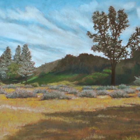 Pinnacles Meadow