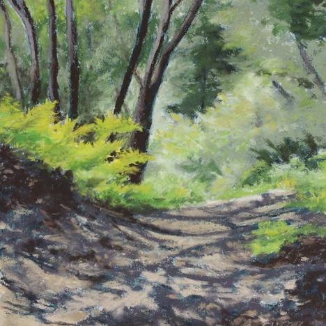 Dappled Path