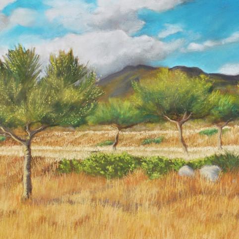Olives near Pigi