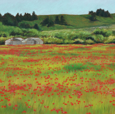 Cloverdale Road Poppies