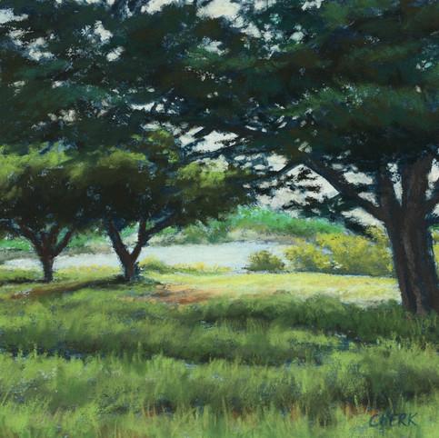 Quiet at Antonelli Pond