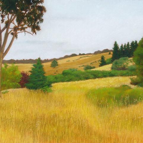 UCSC Hills