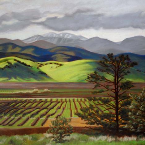 Vineyards to Snow