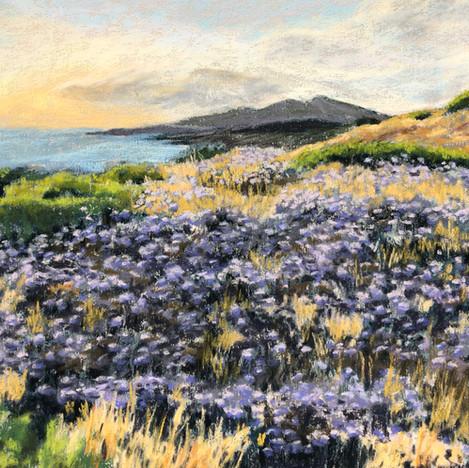 Sea Lavender Sunset, Methoni
