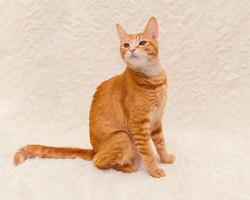 SAM assisted cat 7