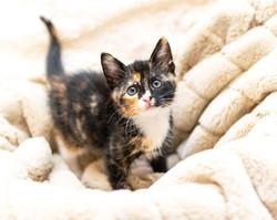 SAM assisted kitten 42