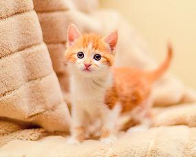 SAM assisted kitten 51
